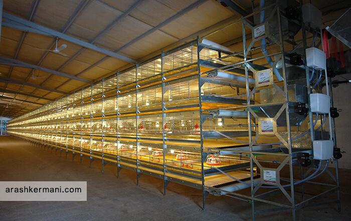 سیستم روشنایی سالن پرورش بلدرچین