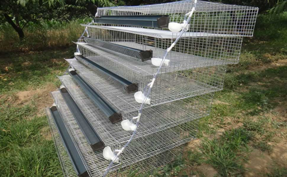 مناسب ترین قفس برای پرورش بلدرچین
