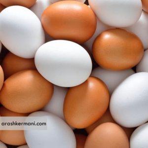 تولید روزانه 350 تن تخم مرغ در استان خراسان رضوی