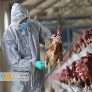 موارد انسانی ابتلا به آنفلوانزای پرندگان شدید و مرگ آور بوده است