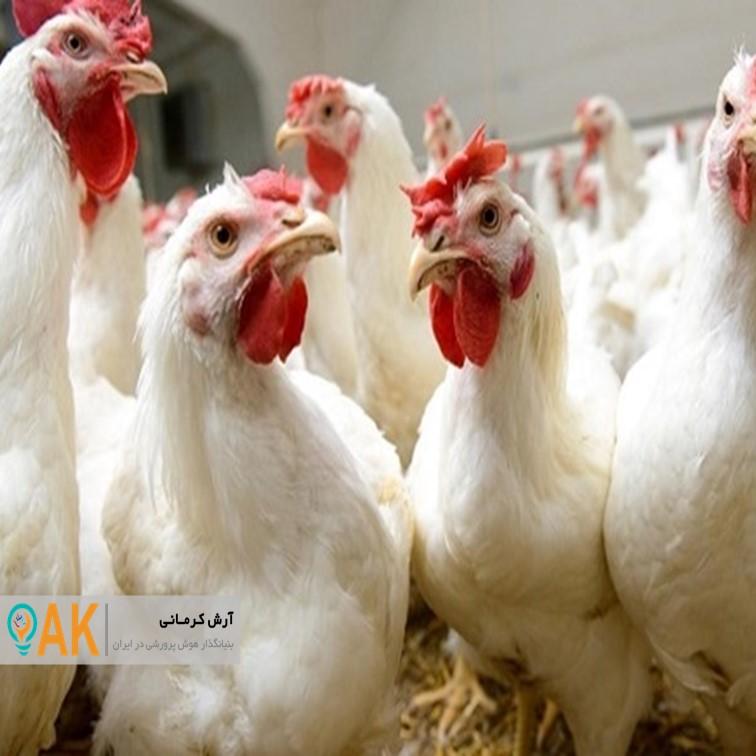 شیوع بیماری آنفلوآنزای فوق حاد پرندگان در ۶ استان کشور