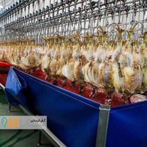 رتبه 9 خراسان شمالی در زنجیره تولید و ارزش طیور