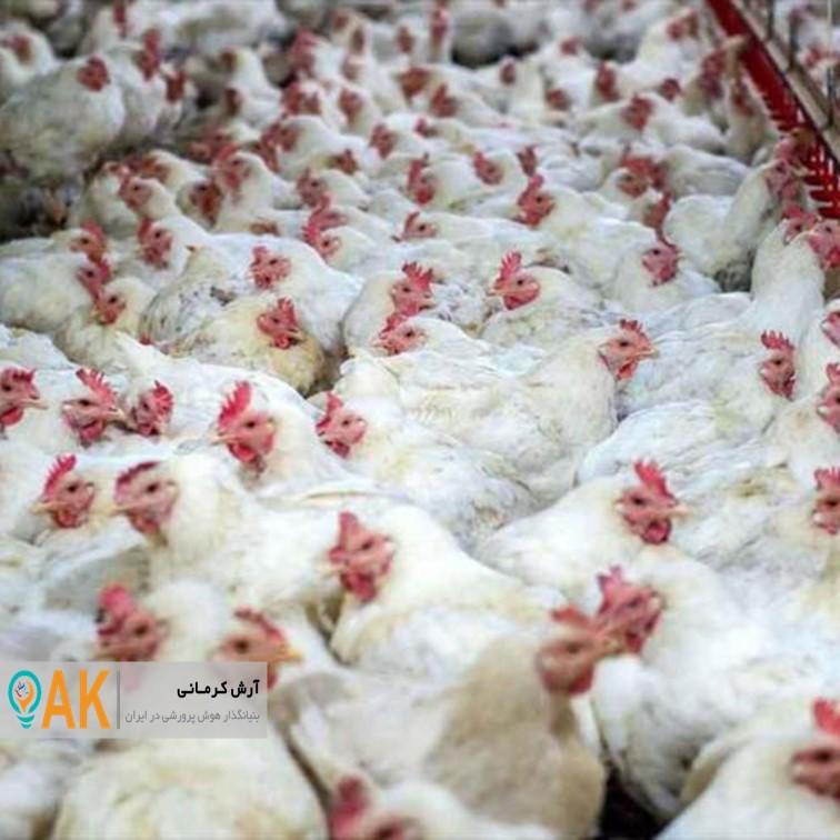 تولیدکنندگان با آرامش خاطر فعالیتهای تولیدی خود را ادامه دهند