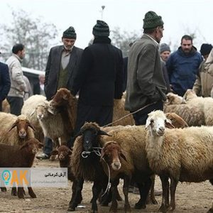 فروش دام زنده در کلانشهر کرمانشاه معنایی ندارد!
