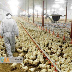 احتمال درگیری مرغداریها با آنفلوانزای فوق حاد طیور افزایش یافته است