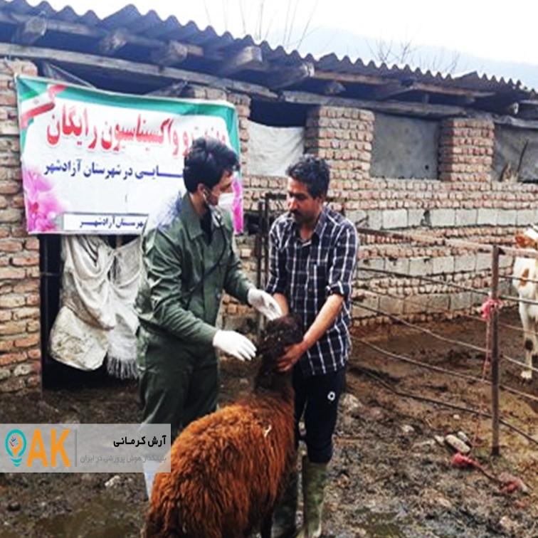 ویزیت رایگان دام و طیور شهرستانهای محروم توسط کارشناسان دامپزشکی